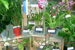 Orchid Show Displays
